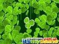 Game Lucky Clover . Play online