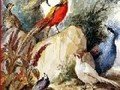 Game Birds in the forest . Play online